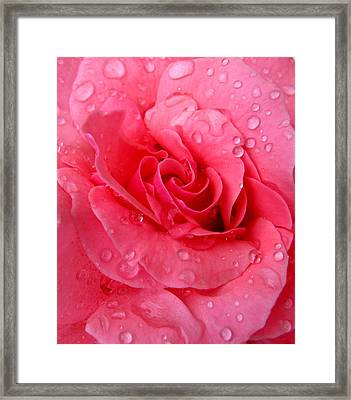 Framed Print featuring the photograph Pink Rose by Patricia Januszkiewicz