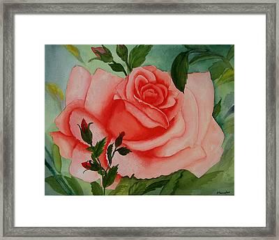 Pink Rose Framed Print by Robert Thomaston