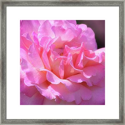 Framed Print featuring the photograph Pink Rose Ruffles by Julie Palencia