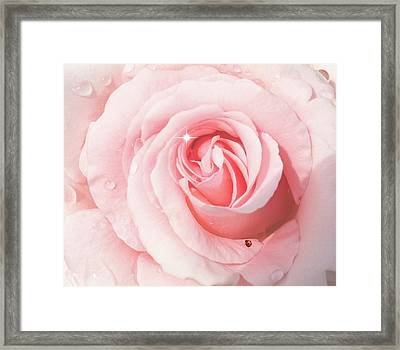 Pink Rose With Rain Drops Framed Print