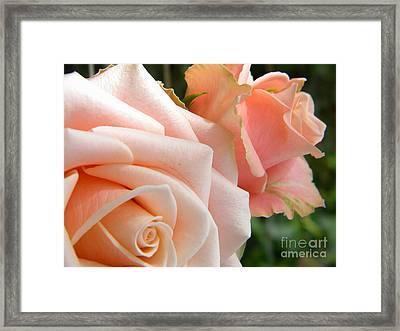 Pink Roses Framed Print by Amanda Heavlow
