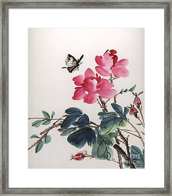 Pink Roses And Butterfly Framed Print by Yolanda Koh