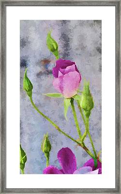 Pink Roses Artistic I Painterly Framed Print by Linda Brody