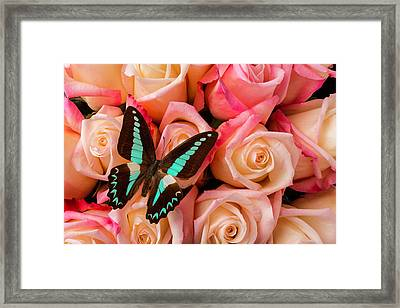 Pink Roses Blue Black Butterfly Framed Print