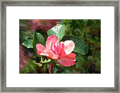 Pink Roses In The Rain 2 Framed Print by Janis Nussbaum Senungetuk