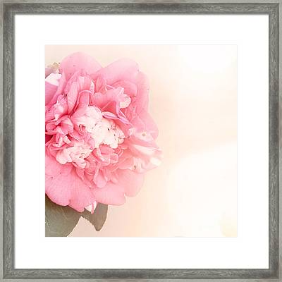 Framed Print featuring the photograph Pink Ruffled Camellia by Cindy Garber Iverson