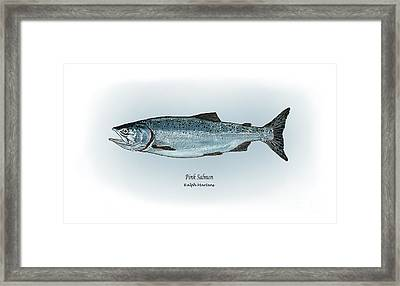 Pink Salmon Framed Print by Ralph Martens