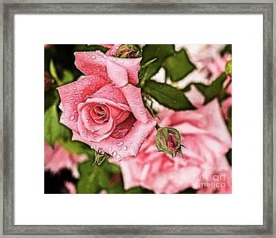 Pink Serenity Framed Print