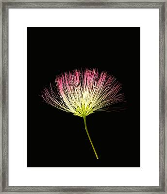 Pink Silk Framed Print by Deborah J Humphries