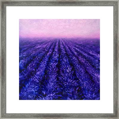 Pink Skies - Lavender Fields Framed Print
