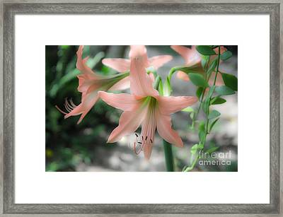 Pink Softness Framed Print by Michelle Meenawong