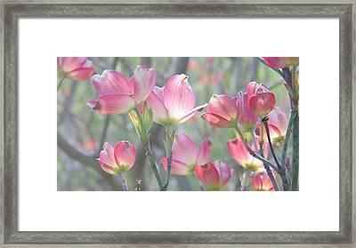 Pink Splendor Framed Print