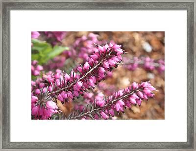 Pink Spray Of Flowers Framed Print