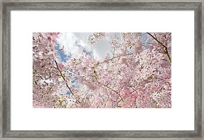 Pink Spring Framed Print by Daniel Furon