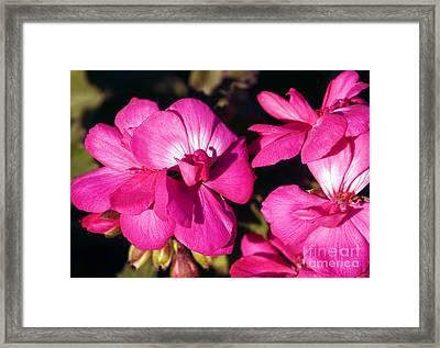 Pink Spring Florals Framed Print