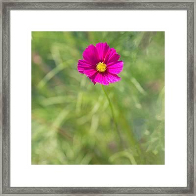 Pink Squared Framed Print by Rebecca Cozart