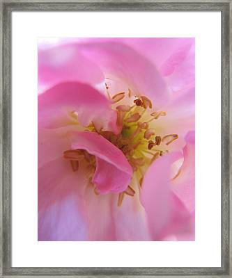 Pink Stamen Framed Print