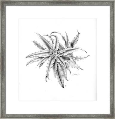 Pink Star In Gray Framed Print by Penrith Goff