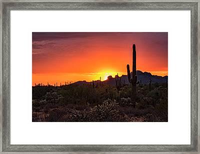 Pink Summer Sunset  Framed Print