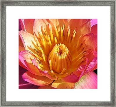 Pink Suprise Framed Print by Bruce Bley