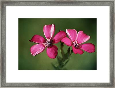 Pink Suspension Framed Print