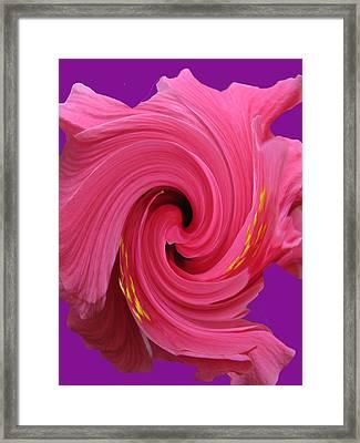 Pink Swirl Hibiscus Flower Framed Print