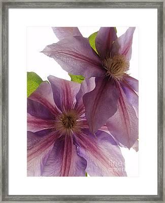 Pink Tenderness Framed Print by Valia Bradshaw