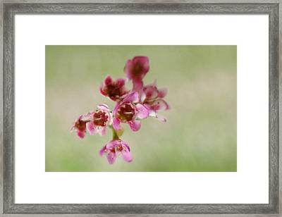 Delicate Flowers Framed Print by Inspired Arts