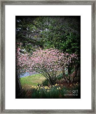 Pink Tree And Daffodils Framed Print by Eva Thomas