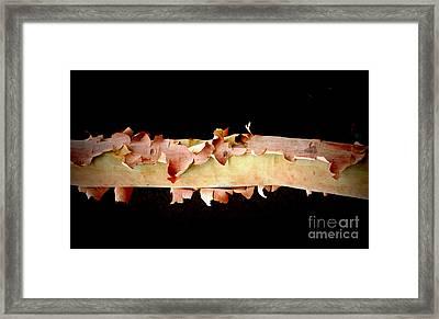 Pink Tree Bark Framed Print by Lexa Harpell