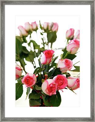 Pink Trimmed Roses Framed Print by Marilyn Hunt