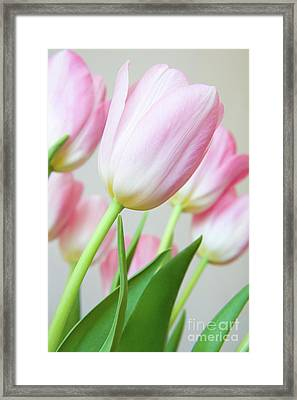 Pink Tulip Flowers Framed Print