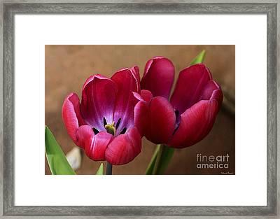 Pink Tulip Pair Framed Print by Deborah Benoit