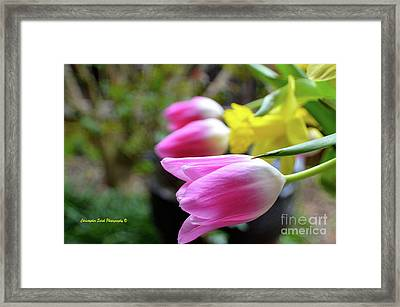 Pink Tulips Row Framed Print