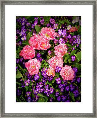 Framed Print featuring the photograph Pink Tulips With Purple Flowers by James Steele