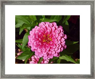 Pink Velvet Framed Print by James Granberry