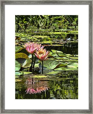 Framed Print featuring the photograph Pink Water Lily Reflections by Bill Barber