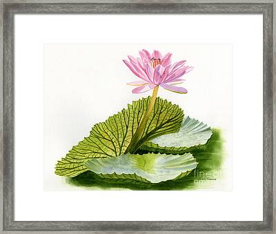 Pink Water Lily With Textured Pads Framed Print by Sharon Freeman