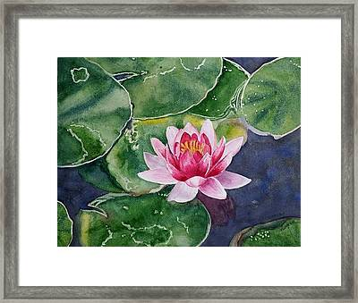 Pink Waterlily Framed Print