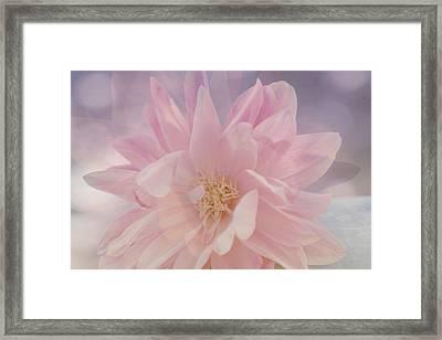 Pink Whisper Framed Print by Bonnie Bruno