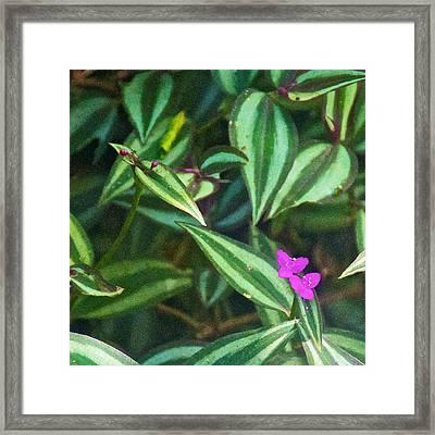 Pink Wildflowers In Iguazu Falls National Park-argentina Framed Print