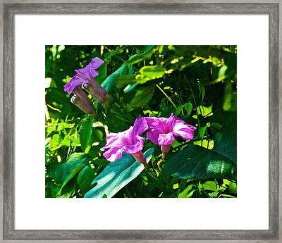 Pink Wildfowers In Iguazu Falls National Park-argentina   Framed Print