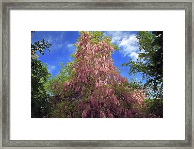 Framed Print featuring the photograph Pink Wisteria by Donna Kennedy