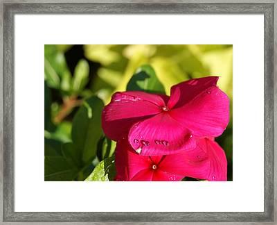 Pinka Vinka Framed Print