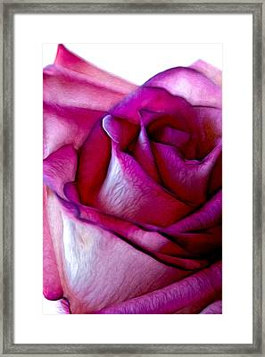 Pinked Rose Details Framed Print by Bill Tiepelman