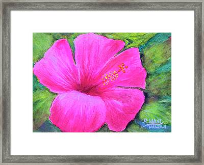 Pinkhawaii Hibiscus #505 Framed Print by Donald k Hall