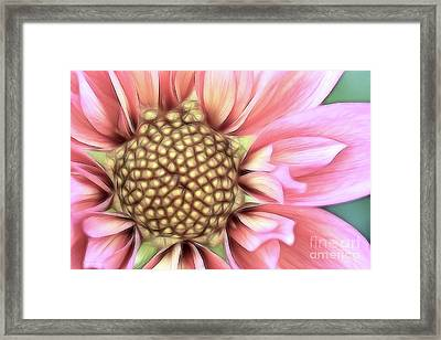 Pinkie Framed Print by Beve Brown-Clark Photography