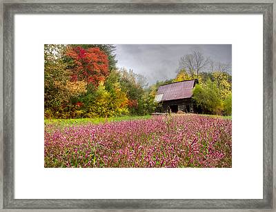 Pinks In The Pasture Framed Print
