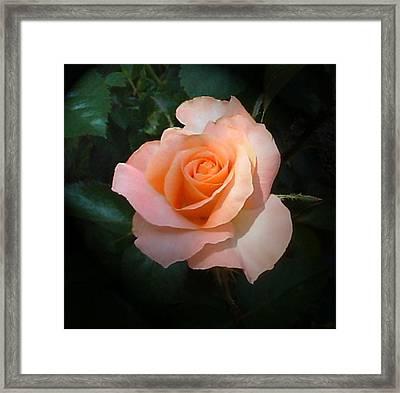 Pinky Framed Print by Barbara Oberholtzer
