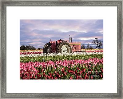 Pinky Jd Framed Print